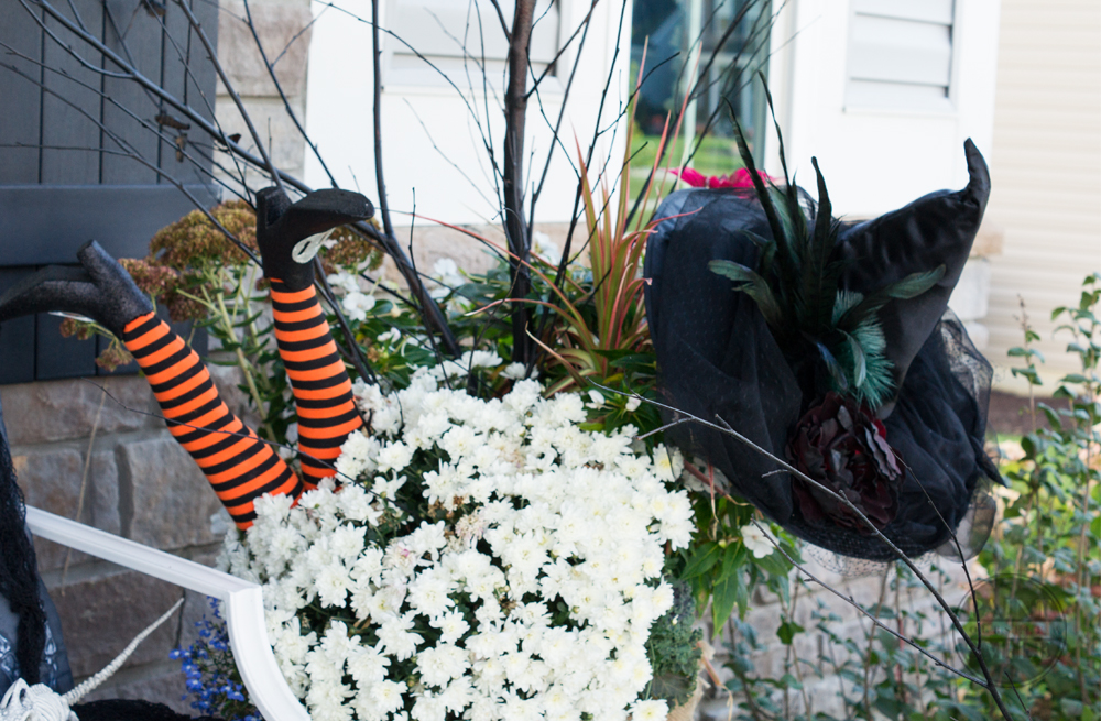 halloween-witch-hat-plant